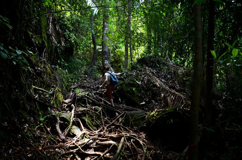 Selva, en Bako