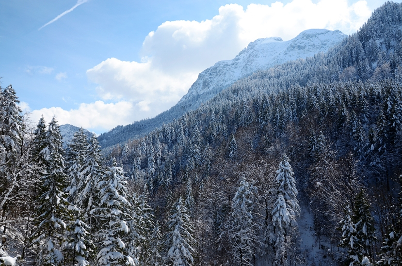 Neu als boscos de Hohenschwangau