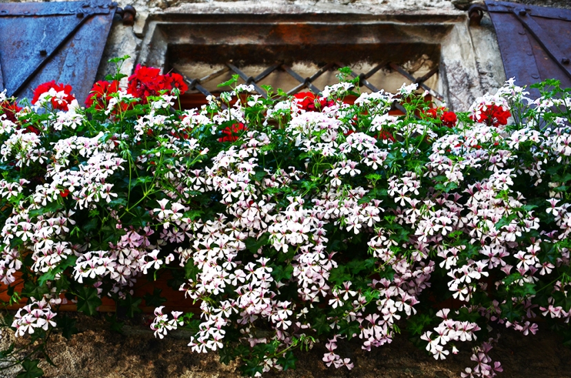 rauris_flors